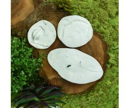 Original Sculpey® Leaf and Seed Pod Fossils